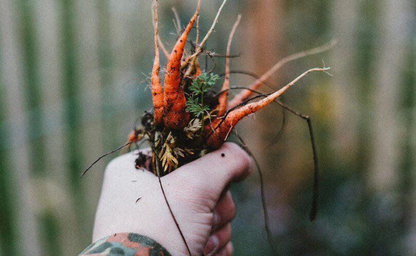 Pinfold Farm Shop freshly picked carrots